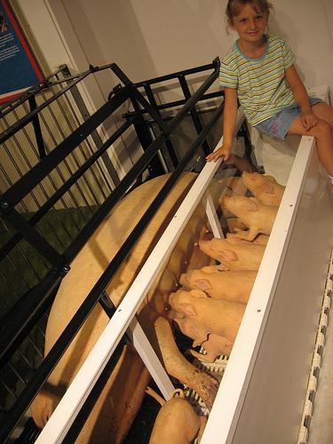 Nursing Piggies