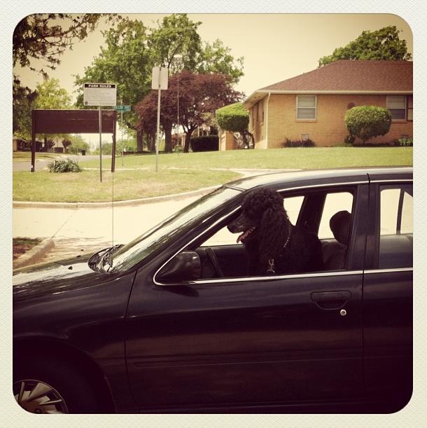 Doggie Driver