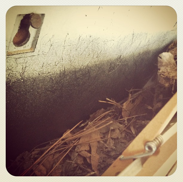 Bird Nest in Mailbox